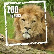 GaiaZOO - leeuw - ZOO is Gaia